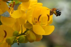 The Blue Banded Bee – The Farmer's Friend Shrubs, Farmer, Wildlife, Bee, Bloom, Gardens, The Incredibles, Link, Plants