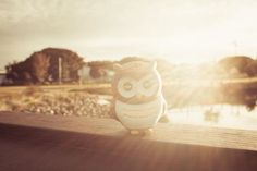 The owls first day in Australia I miss those days so much!