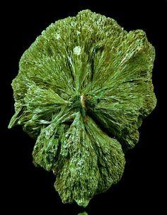 Gormanite,  Fe++3Al4(PO4)4(OH)6•2(H2O), Linópolis, Divino das Laranjeiras, Doce valley, Minas Gerais, Brazil. Cluster of radiating sprays of green gormanite. Dimensions 30 x 20 x 20 mm. Copyright © 2007 Michael C. Roarke