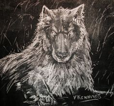 Black Wolf - Chalk on Black Board by Vincent Kennard