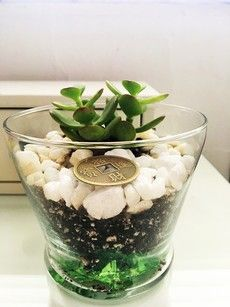 the Jade Plant is the Money Magnet in Feng Shui Why you need a Jade Plant at Home. Meaning and Placement - Unique Feng ShuiWhy you need a Jade Plant at Home. Meaning and Placement - Unique Feng Shui Casa Feng Shui, Feng Shui House, Feng Shui Bedroom, Bedroom Décor, Bedroom Colors, Bedroom Ideas, Feng Shui And Money, How To Feng Shui Your Home, Feng Shui Tips For Wealth