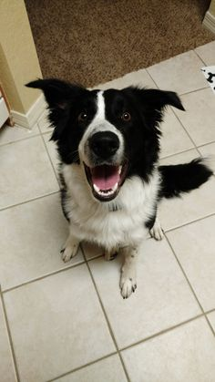 Kratos at 8 months. He always smiles at me like this.   http://ift.tt/2opLKor via /r/dogpictures http://ift.tt/2ox9HHJ  #lovabledogsaroundtheworld