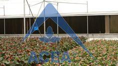 #Invernderos #Invernadero  compuesto por arcos diente de sierra, en batería; su diseño reúne las mayores ventajas para la ventilación natural, ya que el diente de sierra cuenta con...