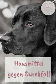 Den Alles In Von Die 9 2017 Besten Bilder Hund Für IDH9EW2