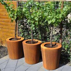 Image result for corten steel planters Fruit Garden, Garden Trees, Edible Garden, Garden Planters, Terrace Garden, Planter Bench, Raised Planter, Planter Pots, Container Plants