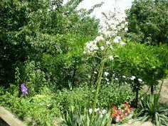 A MAGYAROK TUDÁSA: Természetes permetlevek és növénytársítások kertből, mezőről