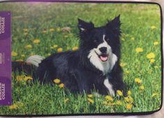 BORDER COLLIE ~ DOG BREED DOOR MAT ~ INDOOR/OUTDOOR USE