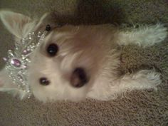 Bella's 4th birthday! July 17, 2012