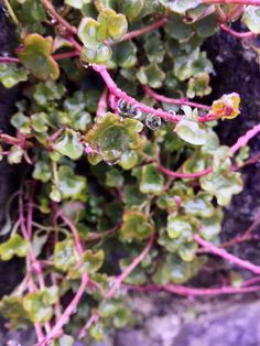 Pretty plant in Ireland