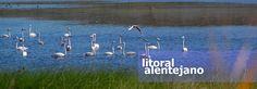 lagoa de santo andré Countryside, Tourism, Coast, Bird, Animals, Water Pond, Littoral Zone, Turismo, Animales