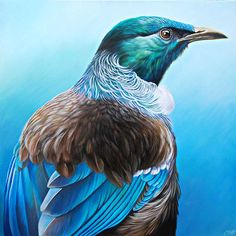 Art by the Sea art gallery specializes in fine NZ arts and crafts, with a huge range of original, fine New Zealand and Maori arts and crafts. Tui Bird, Bird Artists, New Zealand Art, Nz Art, Maori Art, Kiwiana, Fauna, Beautiful Birds, Pet Birds