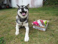 Vitani - DoggieBag.no #DoggieBag #Hund Dogs, Animals, Pet Dogs, Animales, Animaux, Doggies, Animal, Dog, Animais