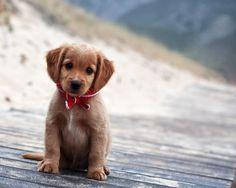 Un petit chien dans un grand monde...