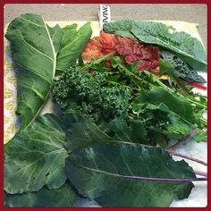 Garden Goodness #organic #raw #juicing #plantpower #rawfood #kale #chard #dandelion #rohlrabi #leaves #greenjuice #fullyraw #rawenergy Organic Recipes, Raw Food Recipes, Raw Energy, Juicing, Kale, Dandelion, Cabbage, Leaves, Vegetables