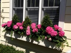 May need to do this with fake Geraniums in my newly installed window boxes rather than spend $$$ on annuals in August.