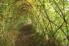 living willow tunnel kirk ireton derbyshire aut 12 042