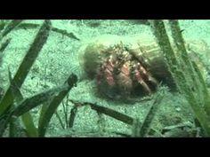 La Posidonia, una especie amenazada // La Posidònia, una espècie amenaçada http://www.educaixa.com/es/-/la-posidonia-una-especie-amenazada