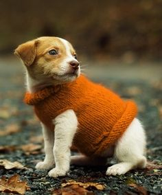 it's sweater weather!