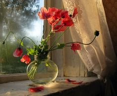 waking to POPPIES! on the window sill.....