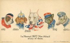 Different pitbull war dogs