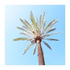 #ibiza #summer #travel #nature #blogger #photography #photo #canon  #lifestyle #pretty #love #stillife #stillifephotography #minimalism #pastel #minimal