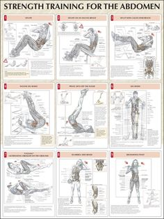 Strength Training For The Abdomen Chart: