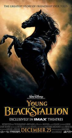 Directed by Simon Wincer.  With Biana Tamimi, Richard Romanus, Patrick Elyas, Gérard Rudolf. A young girl befriends a wild black stallion.