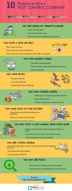 Yale Pest Control | Piktochart Infographic Editor