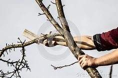 Photo about Lumberjack cutting down the tree whit an ax. Image of males, cutting, equipment - 88629119 My Photos, Stock Photos, Image