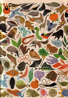 wnycradiolab:    From Charley Harper's wonderful Tree of Life.  More of Charley's work here.