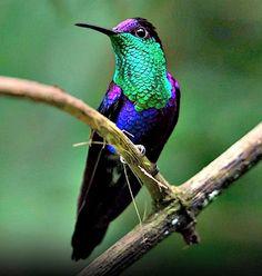 ¡Un colibrí ...! la dulzura