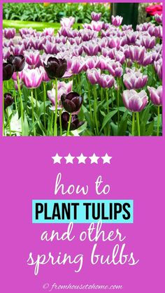 These tips for how to plant bulbs in the fall are awesome! I can wait to have a beautiful spring garden with tulips and daffodils. Click through to get lots of ideas for different bulb varieties, too. #fromhousetohome #bulbs #tulips #daffodils #gardenideas #spring