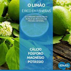 O limão é nutritivo e rico em vitaminas e minerais. A fruta ajuda a fortalecer as defesas do corpo, pois é fonte de potássio, magnésio, cálcio, fósforo, vitamina A e B6. Sua ação alcalina favorece o bom funcionamento do metabolismo, auxilia na redução da pressão arterial, melhora a circulação e a digestão. O consumo do limão, seja em forma de suco ou até como tempero, garante as propriedades benéficas da fruta.