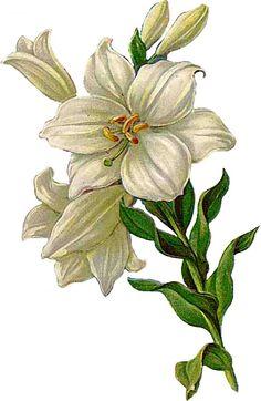 floral theme                                                                                                                                                                                 Mehr