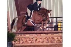 Go to pony finals! Lead Change, Ponies For Sale, 9 Year Olds, Perm, Welsh, Dancer, Horses, Sun, Animals