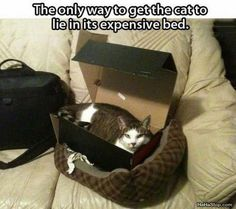 The Shoes That Came in the Box Were Even Fancier - LOLcats is the best place to find and submit funny cat memes and other silly cat materials to share with the world. We find the funny cats that make you LOL so that you don't have to. Funny Animal Photos, Funny Animal Pictures, Funny Animals, Cute Animals, Hilarious Pictures, Funniest Pictures, Animal Pics, Wild Animals, Funny Images
