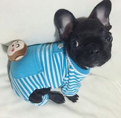 When I get my Frenchie I will dress them up like this!!