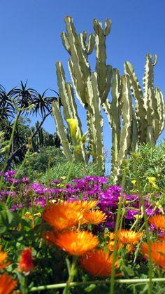 Cactus Garden, San Diego, CA