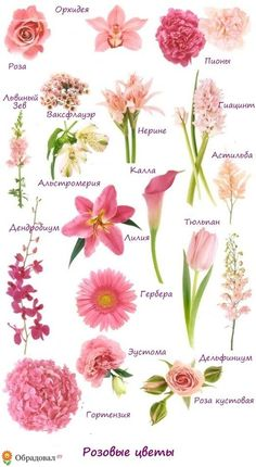Flower names by color arts and crafts pinterest flower who doesnt love pink roses pink roses have a special place in our heart so here we list out of some of the most beautiful pink roses ever mightylinksfo