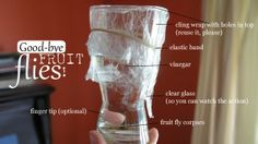 You Can Catch (Fruit) Flies With Vinegar #pestsolution #diy #householdtips