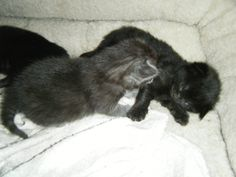 Kittens! Click here to stop your cats from spraying.