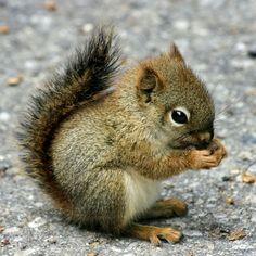 Cute little squirrel nimbling on something :)