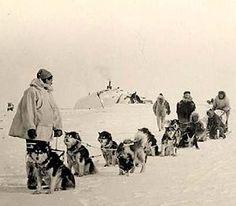 Subsequently in the 1950s, a second strain of Malamute dogs exhibiting a greater variety of colors and sizes was added to the AKC breed registry. These were known as M'loots and like the Kotzebue foundation dogs, these Arctic sled dogs had been used as freighting dogs, for work on traplines and for hunting in native Alaskan communities.