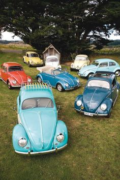 A whole field of Volkswagen