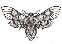death moth - Google Search