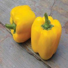 50+ Bell Pepper Sweet Yellow Vegetable Seeds , Under The Sun Seeds