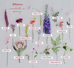 Spring Flower Guide - see what flowers you love are available in Spring!