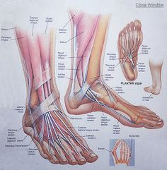 The Perfect Pointe Book: Flat Feet and Pointe Shoes - Can They Go Together?