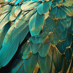 Gold Throw Pillows, Sofa Pillows, Bakery Branding, Teal And Gold, Teal Blue, Dark Teal, Blue Green, Aqua, Gold Aesthetic
