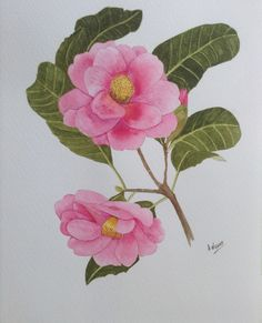 Camelia in Watercolour. Painted by: A. Watercolour, Watercolor Paintings, Pen And Wash, Watercolor Painting, Water Colors, Watercolor, Watercolors, Watercolour Paintings